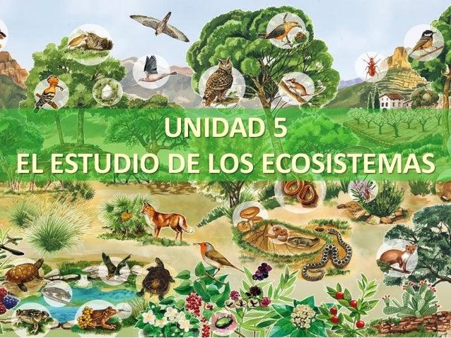 UNIDAD 5 EL ESTUDIO DE LOS ECOSISTEMAS