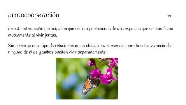 protocooperación 19 en esta interacción participan organismos o poblaciones de dos especies que se benefician mutuamente a...