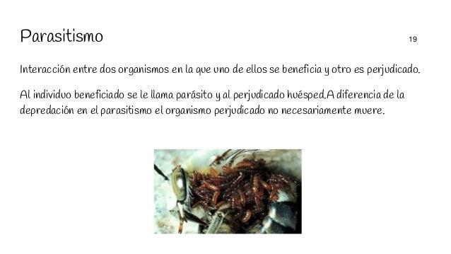Parasitismo 19 Interacción entre dos organismos en la que uno de ellos se beneficia y otro es perjudicado. Al individuo be...