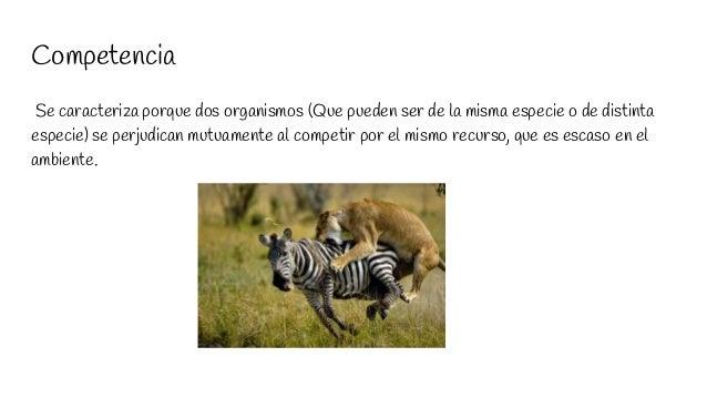 Competencia Se caracteriza porque dos organismos (Que pueden ser de la misma especie o de distinta especie) se perjudican ...