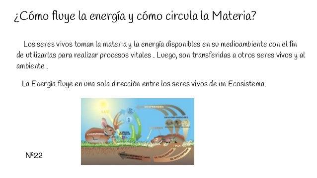 ¿Cómo fluye la energía y cómo circula la Materia? Los seres vivos toman la materia y la energía disponibles en su medioamb...
