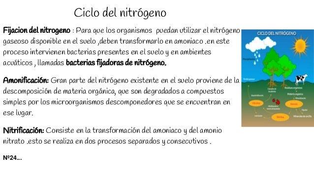 Ciclo del nitrógeno Fijacion del nitrogeno : Para que los organismos puedan utilizar el nitrógeno gaseoso disponible en el...