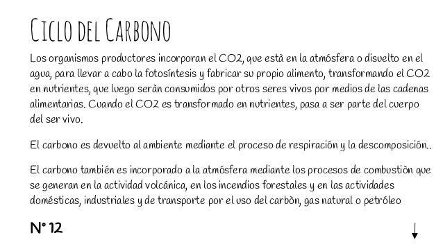 CiclodelCarbono Los organismos productores incorporan el CO2, que està en la atmósfera o disuelto en el agua, para llevar ...