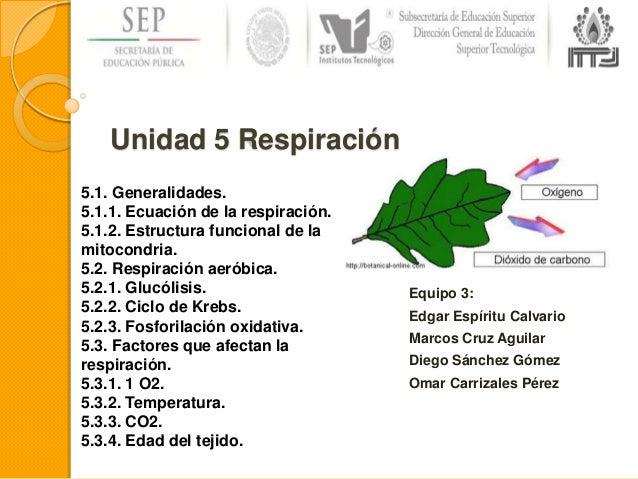 Unidad 5 Respiración Celular