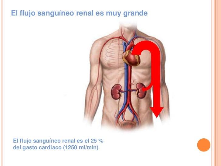 Unidad 5 sistema urinario filtrado secrecion y reabsorcion Slide 3