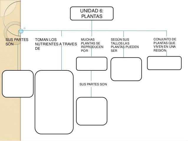 UNIDAD 6: PLANTAS  SUS PARTES SON  TOMAN LOS NUTRIENTES A TRAVES DE  MUCHAS PLANTAS SE REPRODUCEN POR  SUS PARTES SON  SEG...