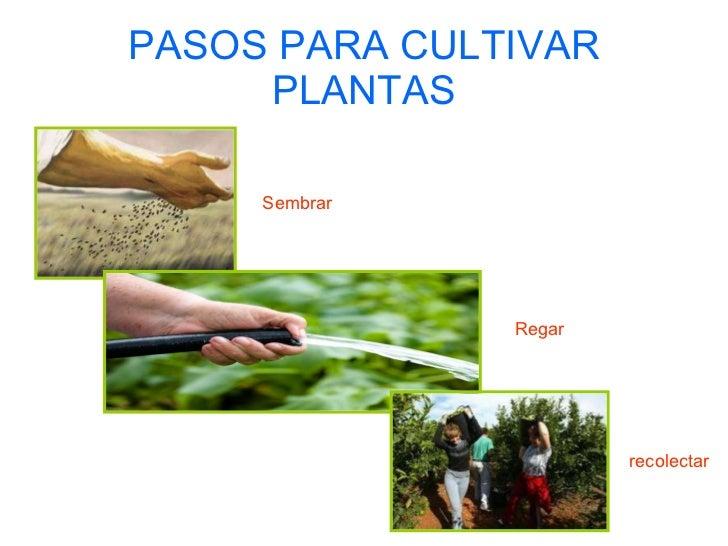 Unidad didactica 6 for Pasos para sembrar una planta