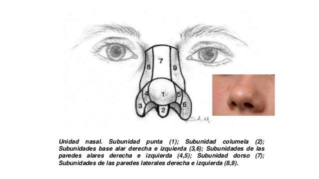 sub-unidades nasales