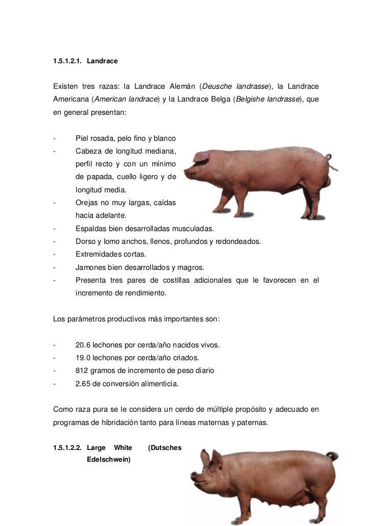 Unidad I Cerdos