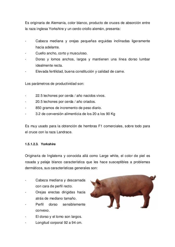 Fantástico Indias Anatomía Cerda Ideas - Imágenes de Anatomía Humana ...