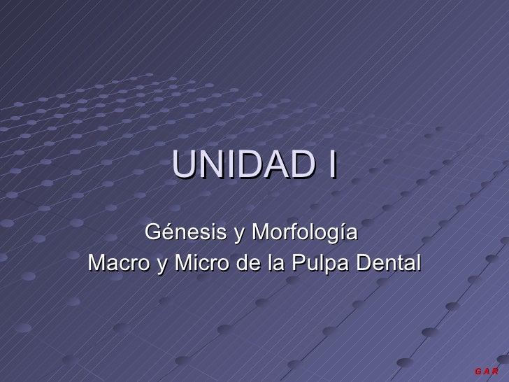 UNIDAD I Génesis y Morfología  Macro y Micro de la Pulpa Dental