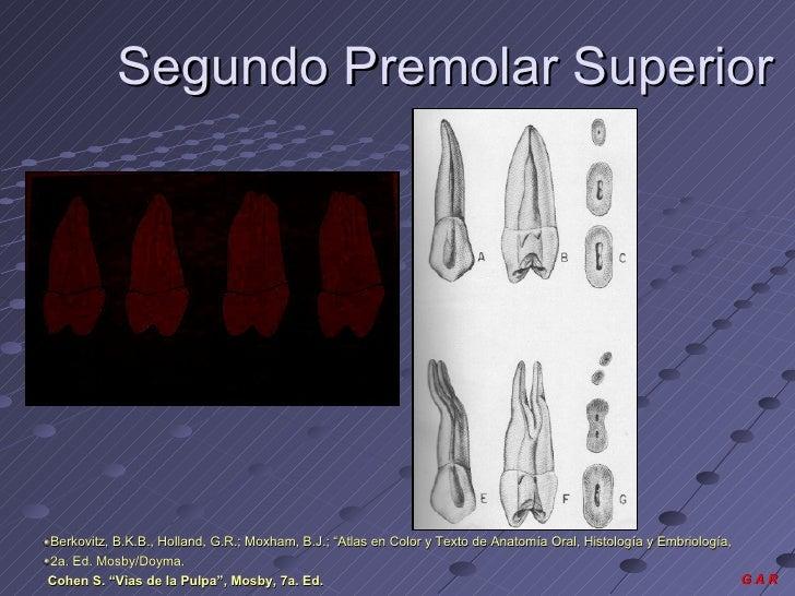 Unidad i genesis y morfolofìa macro y micro de la pulpa dent