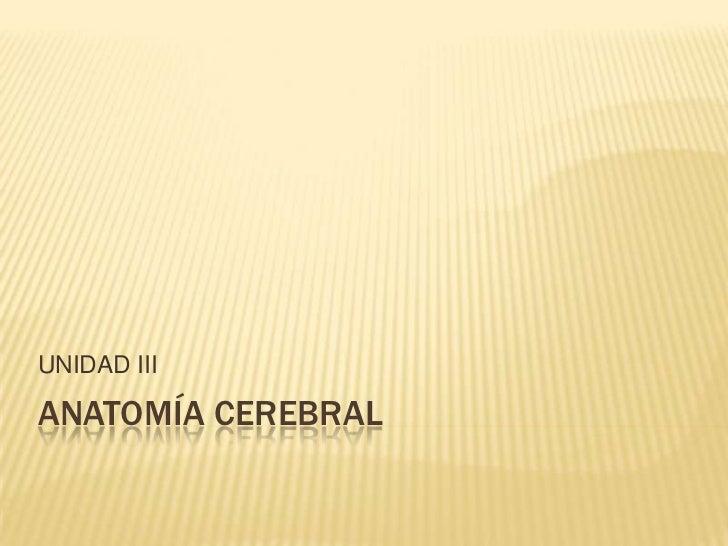 ANATOMÍA CEREBRAL<br />UNIDAD III<br />