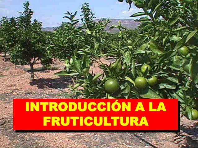 INTRODUCCIÓN A LA FRUTICULTURA