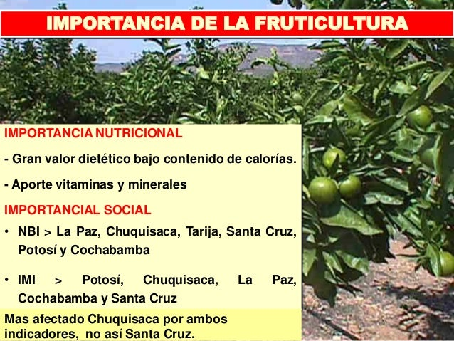 IMPORTANCIA DE LA FRUTICULTURA PDF DOWNLOAD