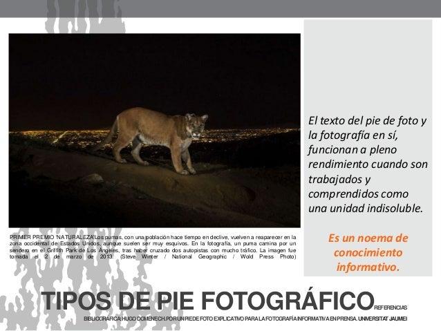 PRIMER PREMIO 'NATURALEZA'Los pumas, con una población hace tiempo en declive, vuelven a reaparecer en la zona occidental ...