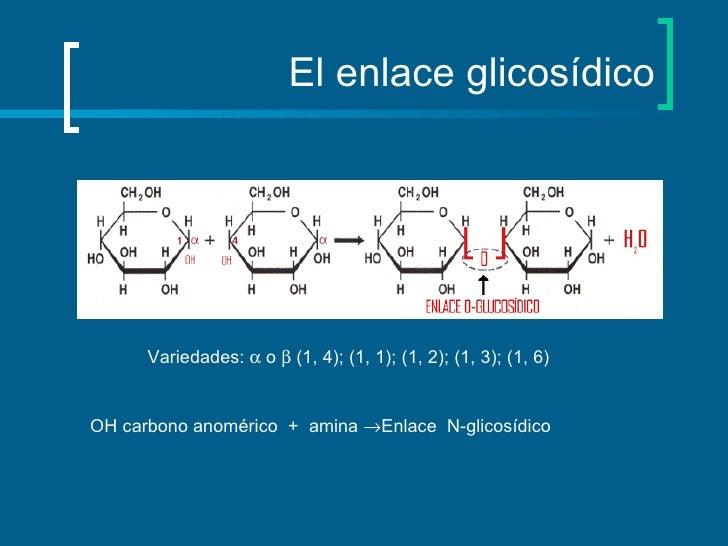 El enlace glicosídico Variedades:    o    (1, 4); (1, 1); (1, 2); (1, 3); (1, 6)  OH carbono anomérico  +  amina   Enla...