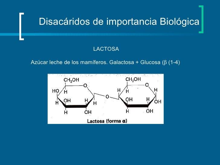 Disacáridos de importancia Biológica LACTOSA Azúcar leche de los mamíferos. Galactosa + Glucosa (   (1-4)