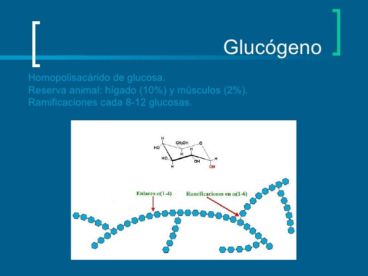 Glucógeno Homopolisacárido de glucosa. Reserva animal: hígado (10%) y músculos (2%). Ramificaciones cada 8-12 glucosas.