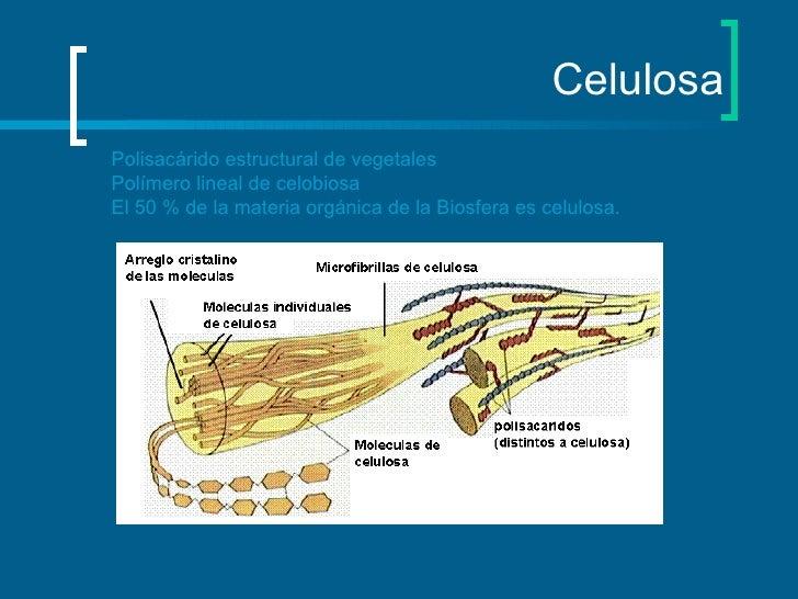 Celulosa Polisacárido estructural de vegetales Polímero lineal de celobiosa El 50 % de la materia orgánica de la Biosfera ...