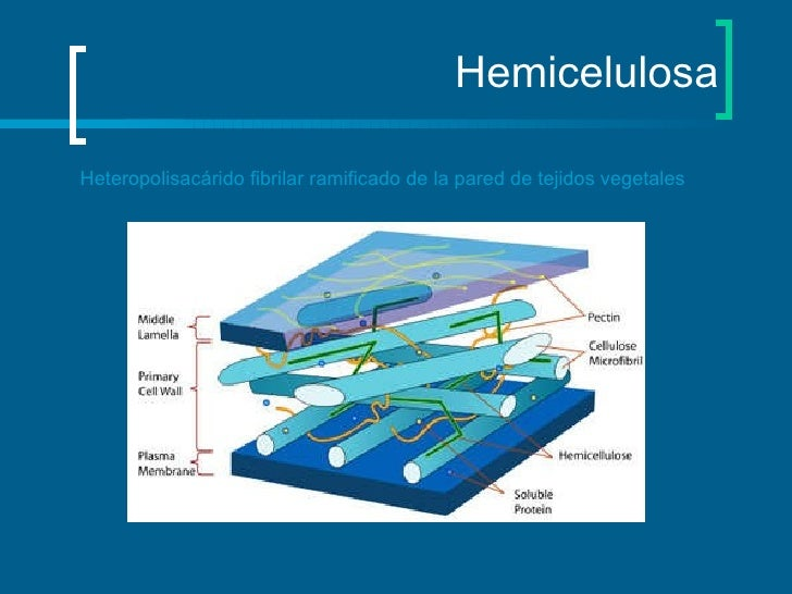 Hemicelulosa Heteropolisacárido fibrilar ramificado de la pared de tejidos vegetales