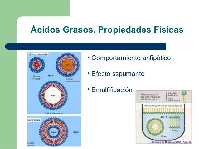 Ácidos Grasos. Propiedades Físicas            • Comportamiento anfipático            • Efecto sspumante            • Emulf...