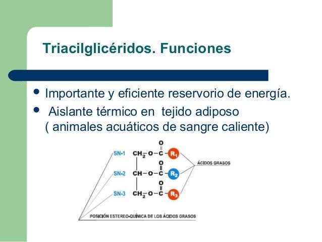Triacilglicéridos. Funciones Importante y eficiente reservorio de energía. Aislante térmico en tejido adiposo ( animales...