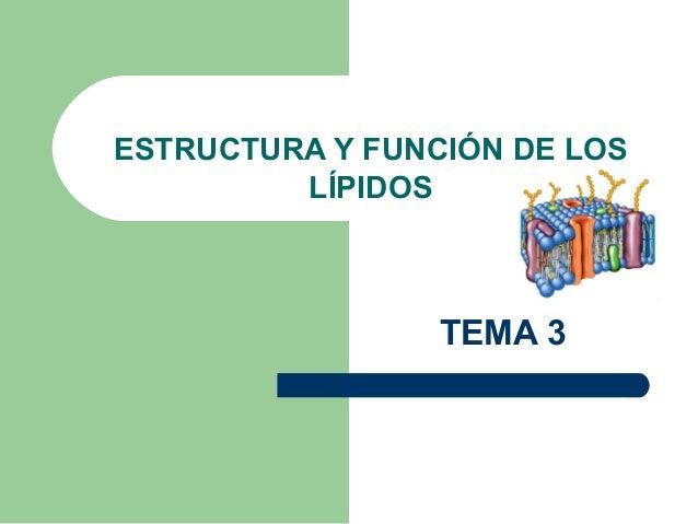 ESTRUCTURA Y FUNCIÓN DE LOS         LÍPIDOS                 TEMA 3