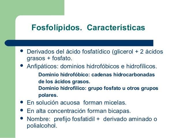 Fosfolípidos. Características   Derivados del ácido fosfatídico (glicerol + 2 ácidos    grasos + fosfato.   Anfipáticos:...
