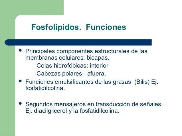 Fosfolípidos. Funciones   Principales componentes estructurales de las    membranas celulares: bicapas.        Colas hidr...