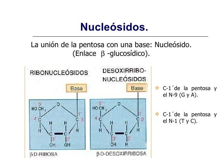 Estructura de las proteinas yahoo dating 8