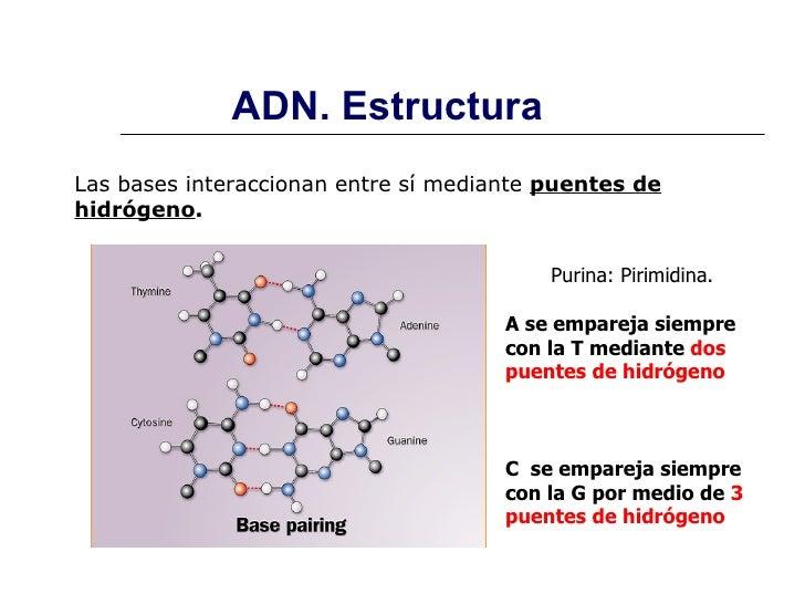 Estructura Y Función De ácidos Nucleicos