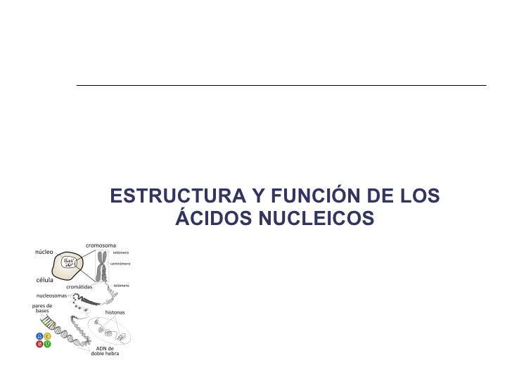 Estructura y función de Ácidos nucleicos Slide 2