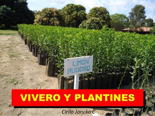 Unidad iv viveros for Viveros frutales wikipedia