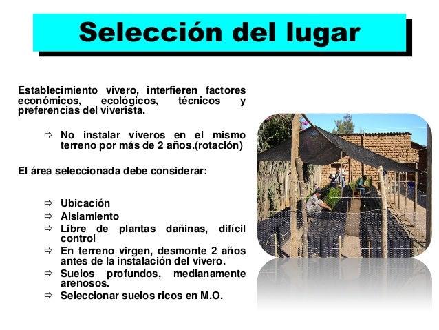 Unidad iv viveros for Factores para seleccionar el terreno para el vivero
