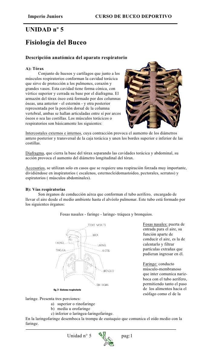 Imperio Juniors                              CURSO DE BUCEO DEPORTIVO  UNIDAD nº 5  Fisiología del Buceo  Descripción anat...