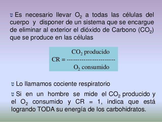  טּLos alvéolos están formados por un epitelio detipo Cerrado, no permite el paso con facilidad deNa+ ni K+, pero si agua...
