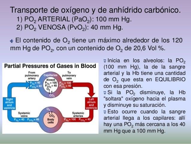  ﮭHay un equilibrio entre el O2 ligado a la Hb y laPO2 ambiente: si la PO2 aumenta, se fija más O2; sila PO2 disminuye, ...