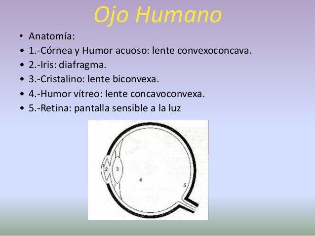 Ojo Humano• Acomodación: Ajuste focal – formación de la imagen en la  retina.• Tienen que ocurrir 3 procesos:• Contracción...