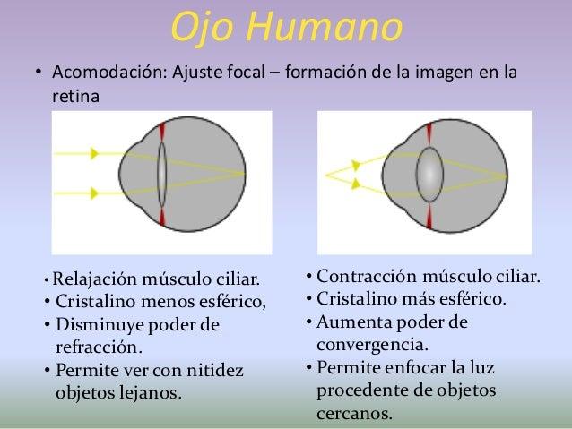Ojo Humano• Defecto de la Visión• Presbicia: Capacidad de ver nitidamente objetos cercanos.• Poder de acomodación del cris...