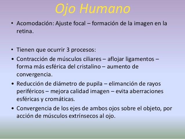 Ojo Humano• Defecto de la VisiónOjo emétrope:  OJO NORMAL: relajado, la imagen  de un objeto situado a mas de 6 m,  se for...