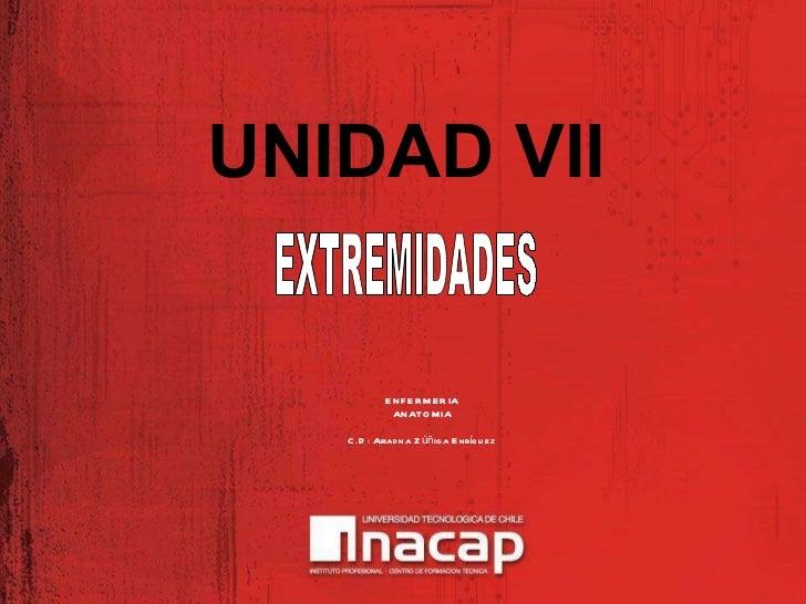 UNIDAD VII ENFERMERIA ANATOMIA C.D: Ariadna Zúñiga Enríquez EXTREMIDADES