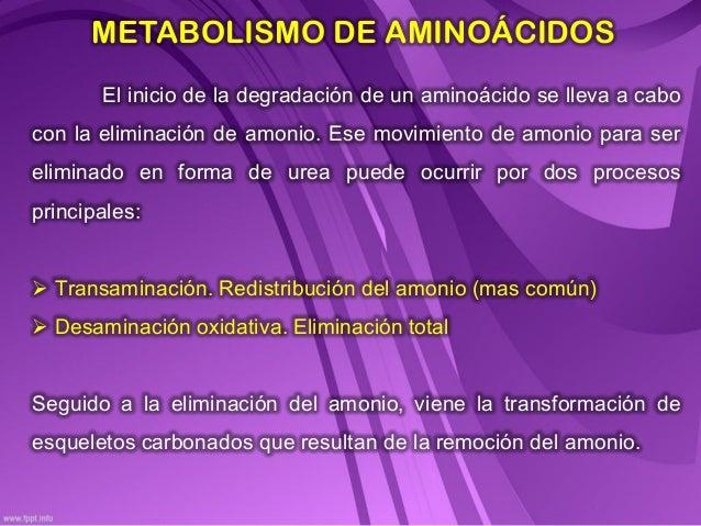 Tipos de metabolismo hombre