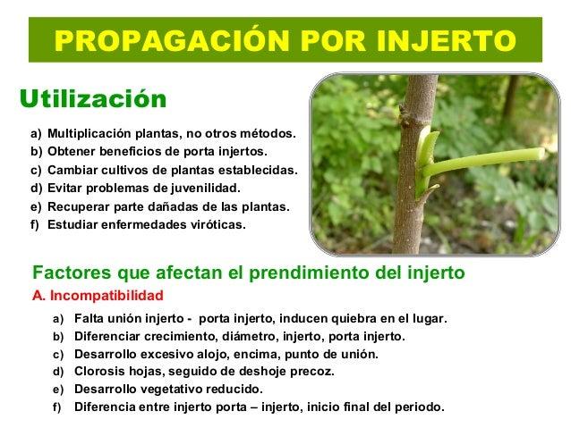 Unidad v m todos de propagaci n frutales for Incompatibilidad en plantas