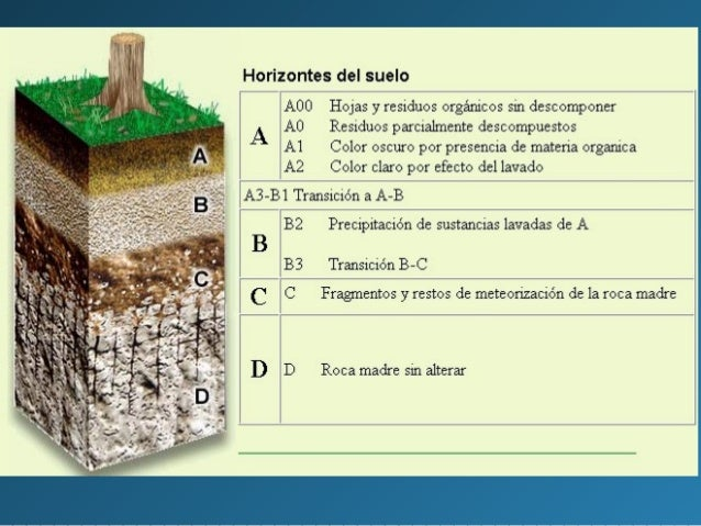Unidad 11 las interfases el suelo ppt for Como esta constituido el suelo