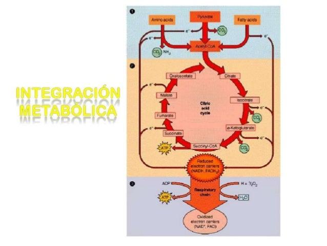 Unidad XIregulación e integración metabólica