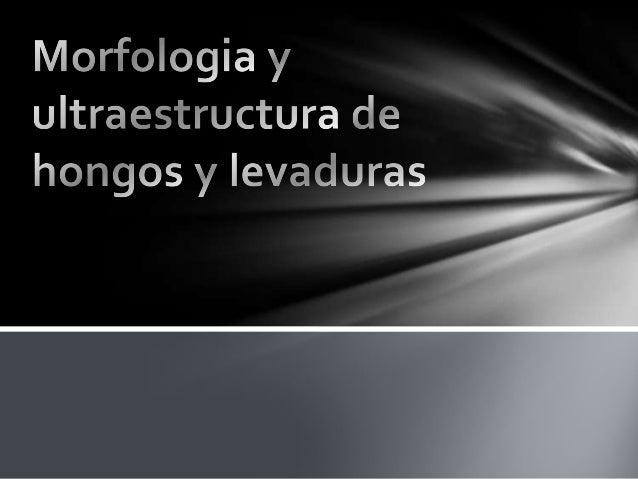 LOS HONGOS MICROSCÓPICOS COMPRENDEN LAS LEVADURAS, HONGOS FILAMENTOSOSY MOHOS