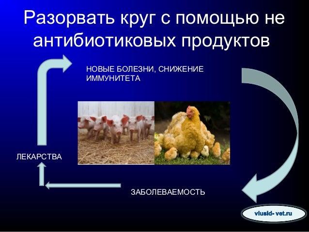 Разорвать круг с помощью не антибиотиковых продуктов. ЗАБОЛЕВАЕМОСТЬ ЛЕКАРСТВА НОВЫЕ БОЛЕЗНИ, СНИЖЕНИЕ ИММУНИТЕТА