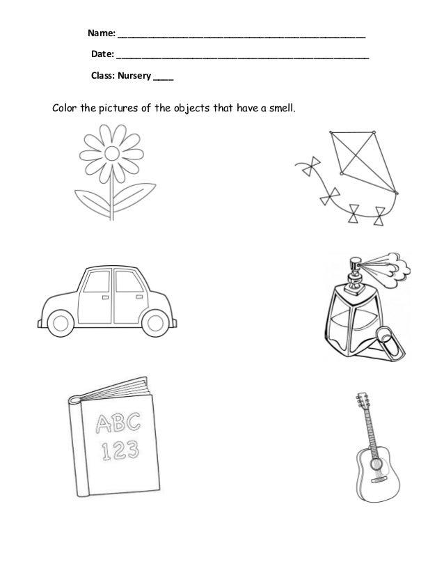 The Five Senses Worksheets Proga Info