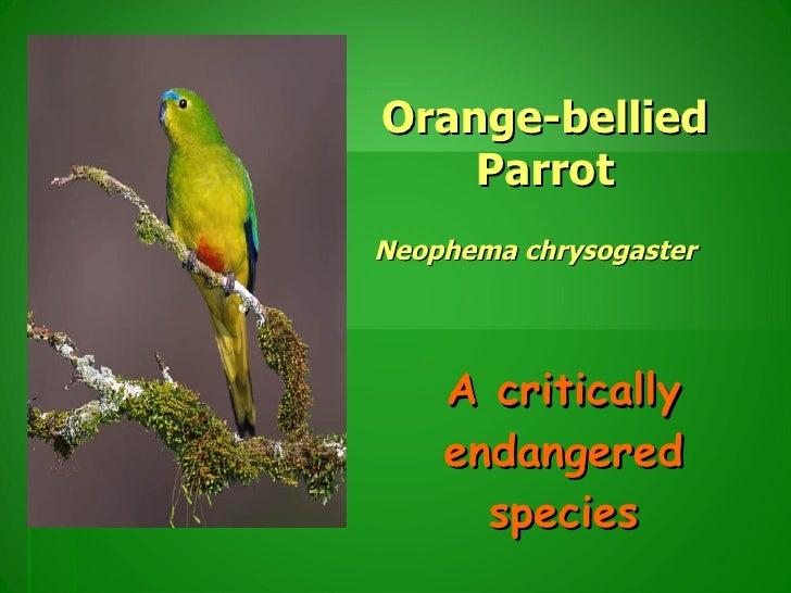Orange-bellied Parrot Neophema chrysogaster   A critically endangered species